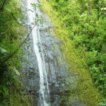 Manoa Falls マノアの滝