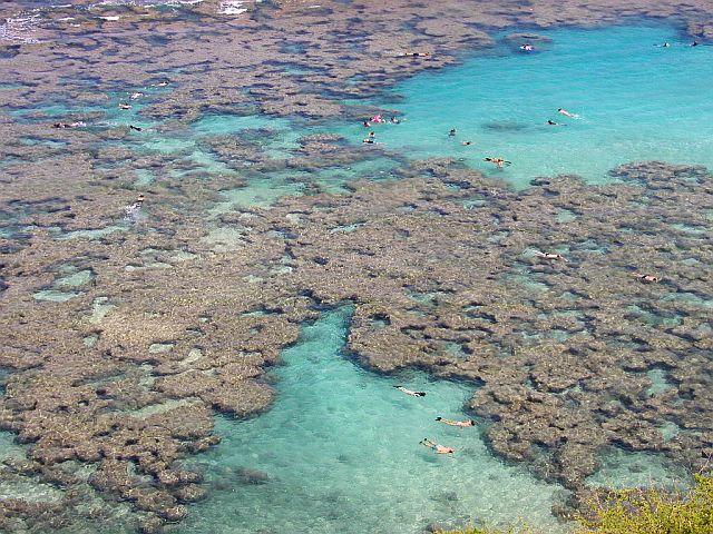 ハナウマ湾のシュノーケリング