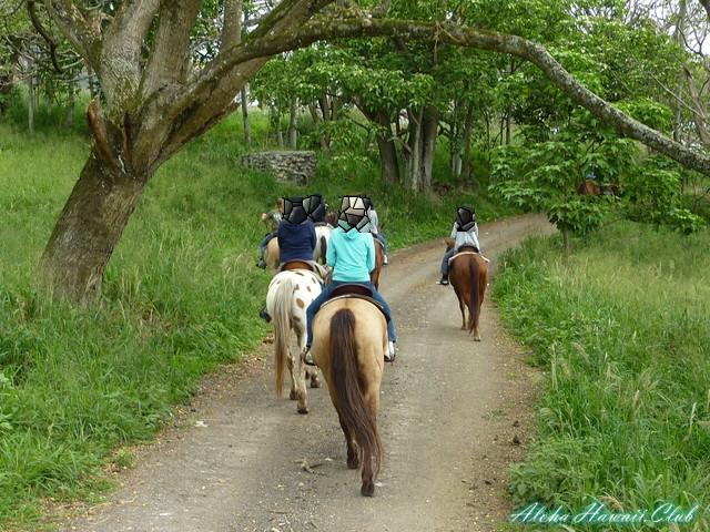 クアロア・ランチ乗馬