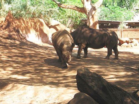 ホノルル動物園のサイ