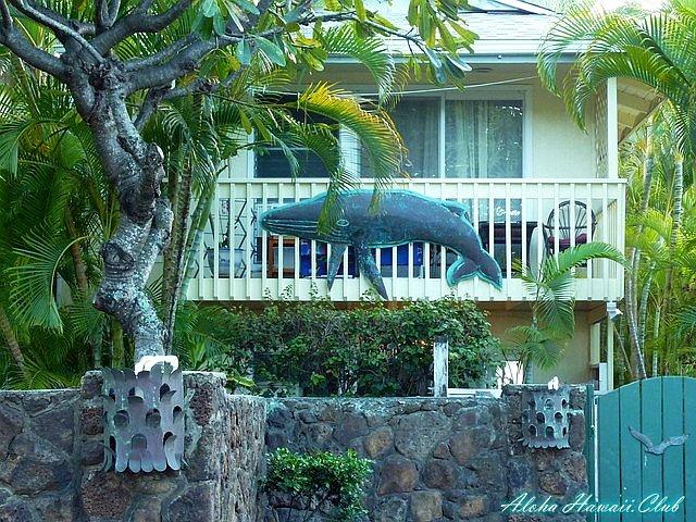 ラニカイビーチ鯨
