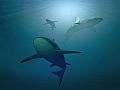 サメの事故に合わない方法